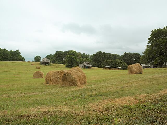 Hay rolls, rural America farmland, North Carolina