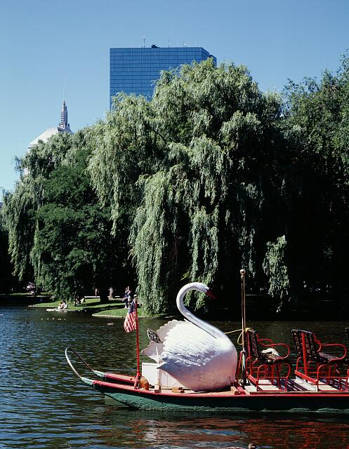Iconic swan boat awaits passengers at the Lagoon, the Boston Public Garden, Boston, Massachusetts