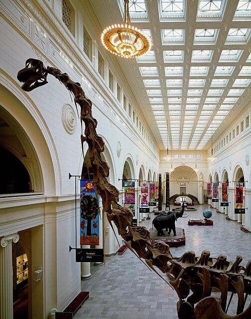 Exhibit hall at the Field Museum of Natural History in Grant Park, Chicago, Illinois