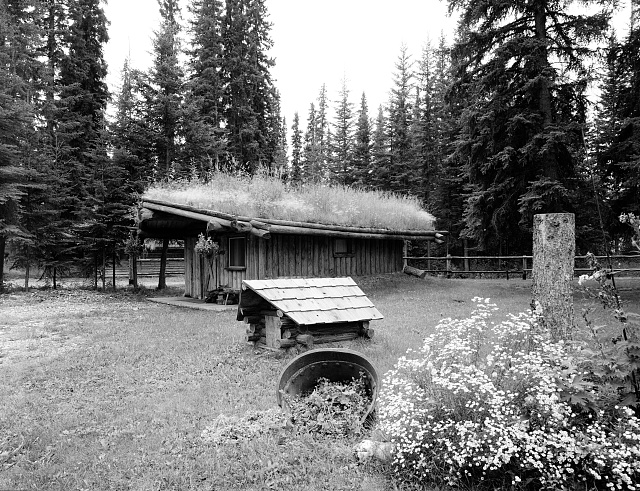 Grass roof on a cabin in North Pole, Alaska