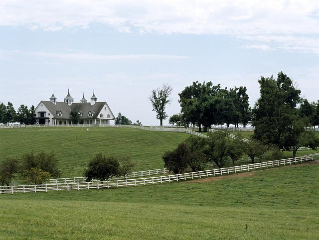 "Horses graze on a farm in bluegrass ""horse country,"" Lexington, Kentucky"