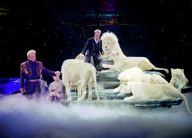 Performance by the illusionists Siegfried & Roy prior to Roy's nearly fatal mauling by one of the show's tigers onstage. Las Vegas, Nevada