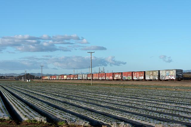 "A string of ""tagged"" (with graffiti) freight cars near a strawberry field in San Luis Obispo County, California"