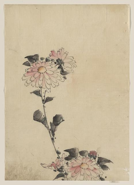[Pink flower blossoms on low stalk and two on a tall stalk]