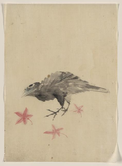 [A bird, possibly crow or raven, facing left, standing among leaves with head cocked as though looking closely or listening]