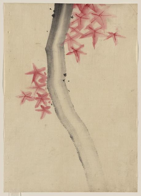 [Unidentified, possibly a tree branch with red star-shaped leaves or blossoms]