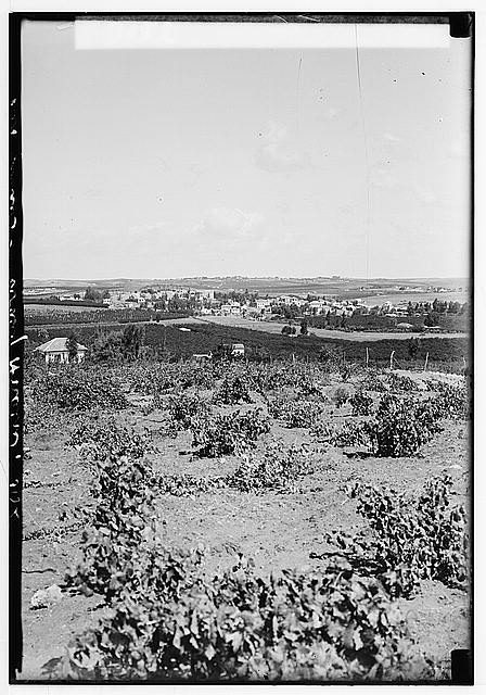 Zionist colonies on Sharon. Ramat Gan. North of Tel-Aviv