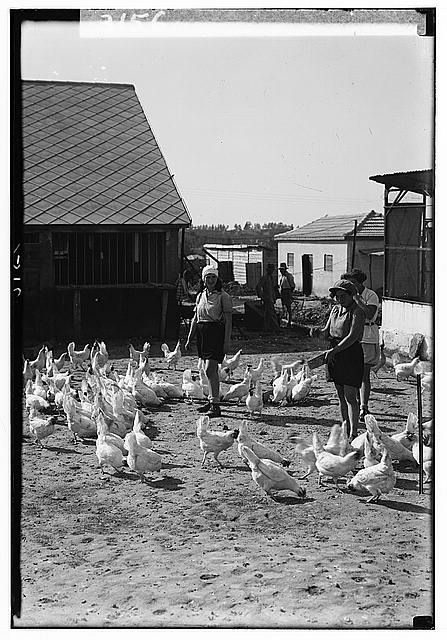 Zionist colonies on Sharon. Borochov. Girls' farm, feeding poultry