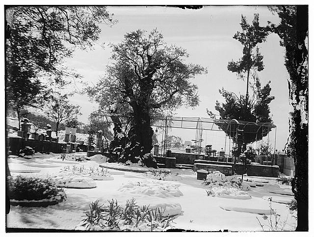 Snow in Jerusalem, 1921. Trees, gazebo, and garden?