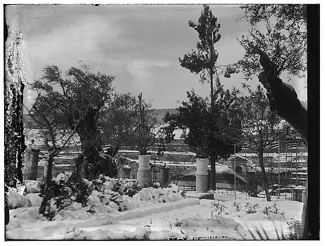 Snow in Jerusalem, 1921. Snow, trees and garden?
