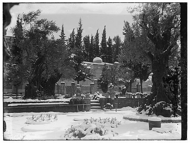 Snow in Jerusalem, 1921. Trees and garden?