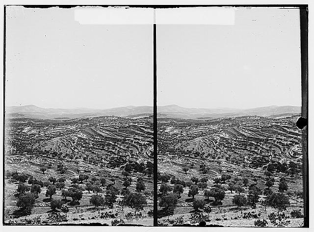 Bethlehem and surroundings. Vineyards and olive groves near Bethlehem