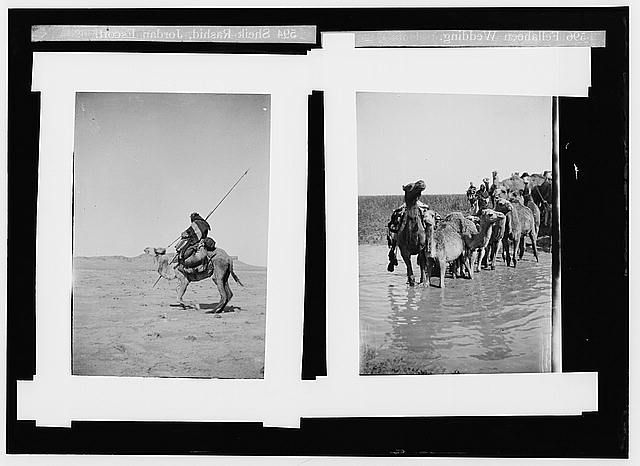 Costumes, characters, etc. Bedouin warrior making his camel kneel ; camels fording stream in Valley of Elah