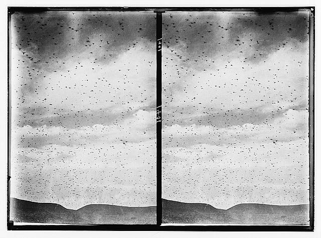 The terrible plague of locusts in Palestine, March-June 1915. Cloud of locusts coming over the horizon.