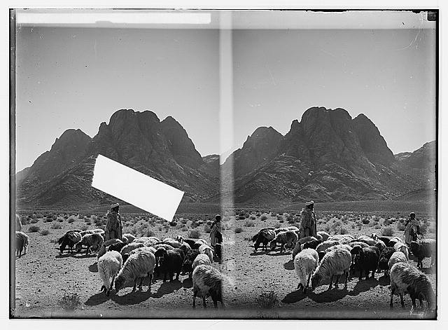 To Sinai via the Red Sea, Tor, and Wady Hebran. Shepherds and flocks before Mount Sinai.