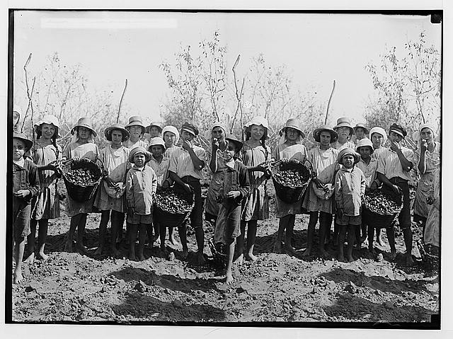 Jewish colonies and settlements. Richon le Zion. Group of almond gatherers