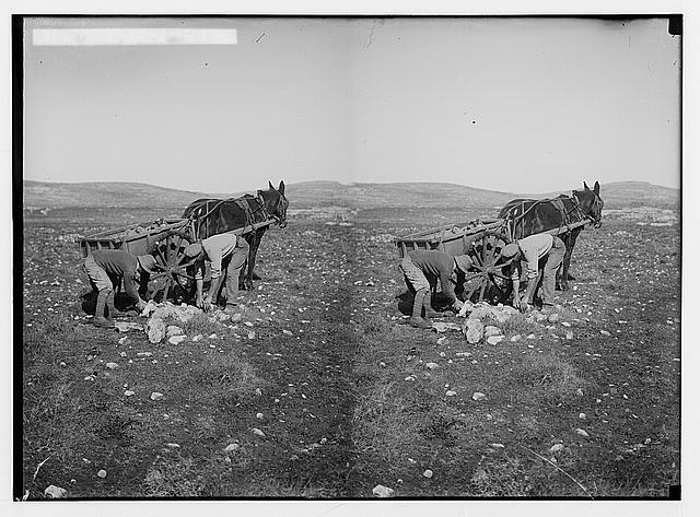 Jewish colonies and settlements. Commencing a Jewish settlement; a camp. Gathering stones in field