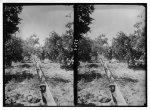 digital file from original photo