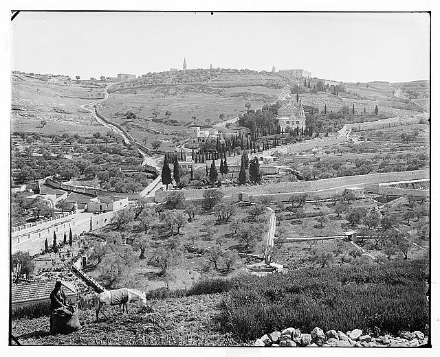 Jerusalem (El-Kouds). Mount of Olives from the west