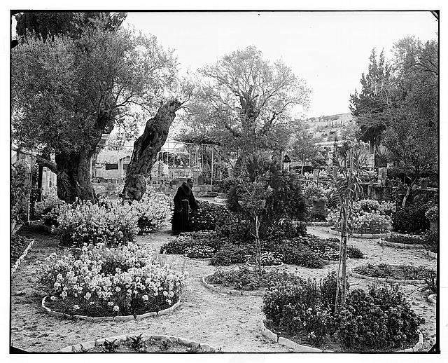 Jerusalem (El-Kouds). Garden of Gethsemane, interior