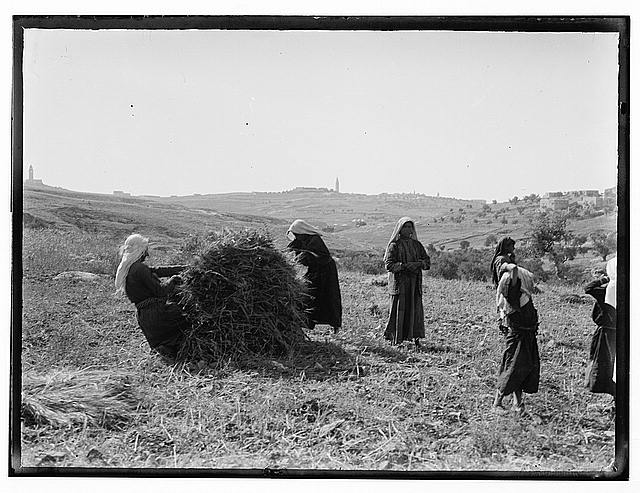 Arab women, agric. [i.e., agriculture]