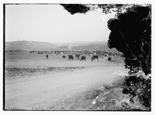 6th Australian light horse regiment, 1918 camped outside Jerusalem in Mt. Scopus areas