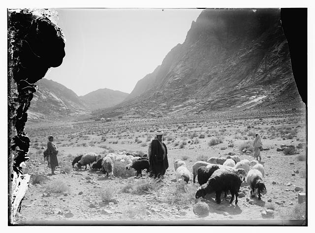 Shepherd w[ith] flocks in front of Mt. Horeb [Mt. Sinai]