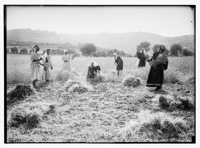 Ruth series. Threshing floor, winnowing, etc