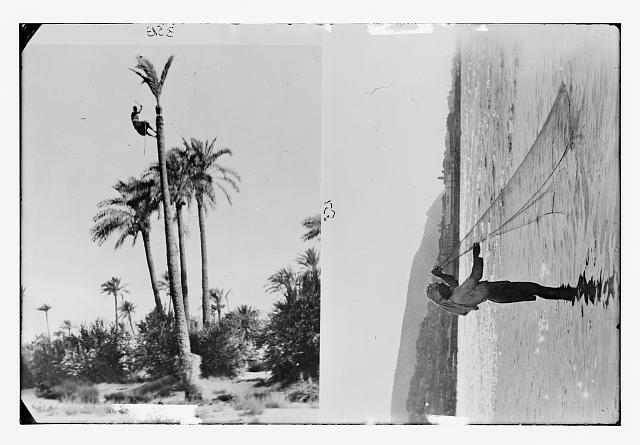 [Man climbing palm tree; man with fishing net, Sea of Galilee?]]
