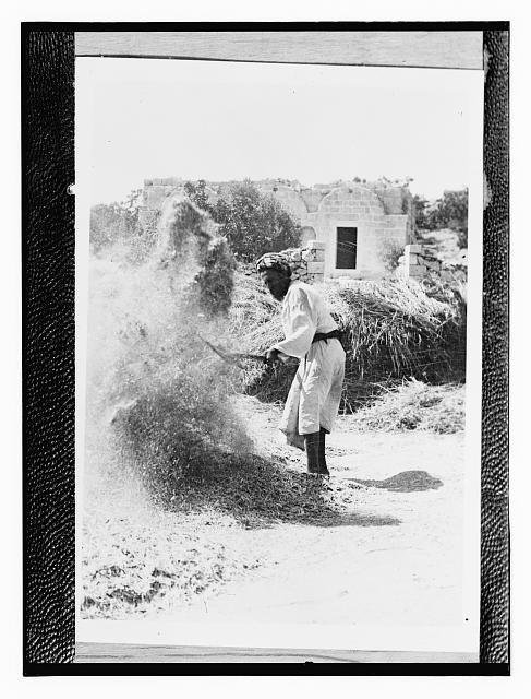 [Copy of a photograph showing a man winnowing]