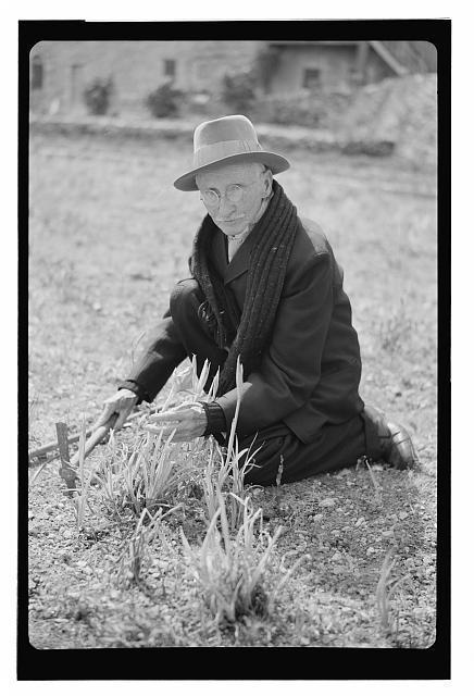 [Botanist and American Colony member John Edward Dinsmore]
