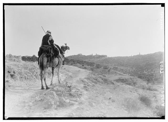 Bethlehem and surroundings. Evening on road to Bethlehem, camel-rider approaching Bethlehem in the twilight