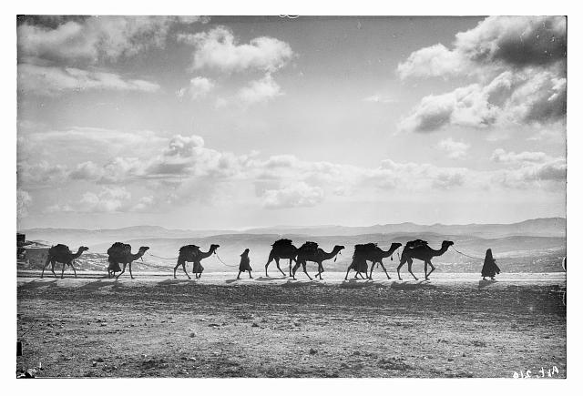 [Egyptian camel transport passing over Olivet, 1918]