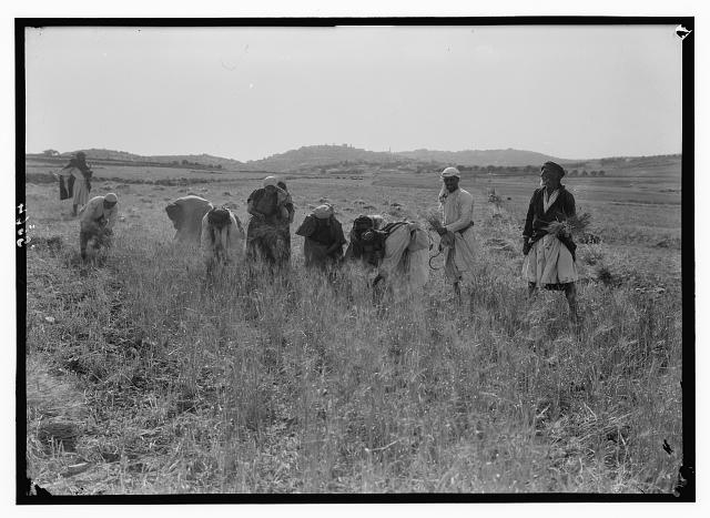 [People harvesting in field]