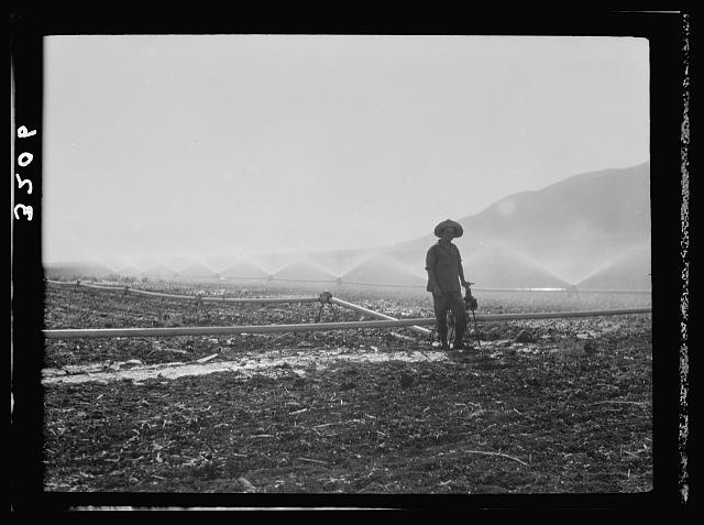"The Keren Hayesod. Agricultural Colonies on Plain of Esdraelon ""The Emek."" Artificial rain on the plain of Jezreel. A series of sprays from irrigating pipes"