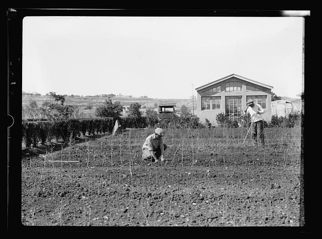 Agriculture, etc. Government tree nursery in Jerusalem on western slope of Mount Scopus