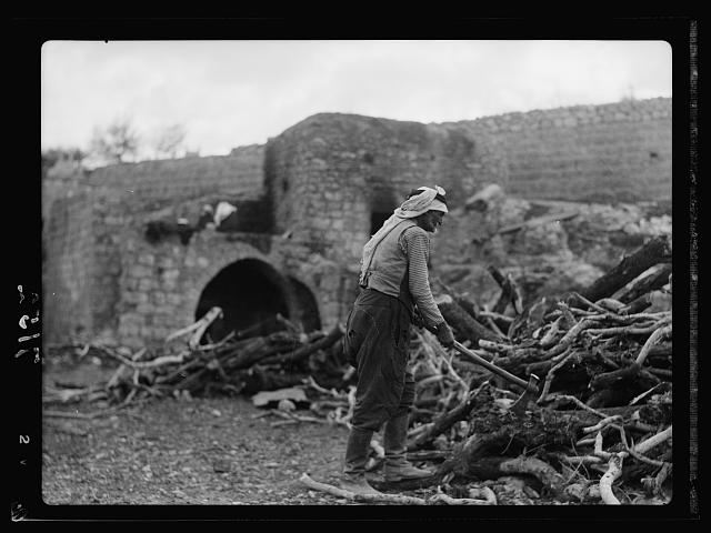 A hewer of wood in Palestine. Chopping olive wood