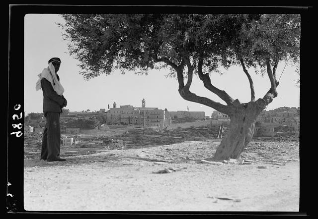 Bethlehem, Church of Nativity. Distant view framed by olive tree