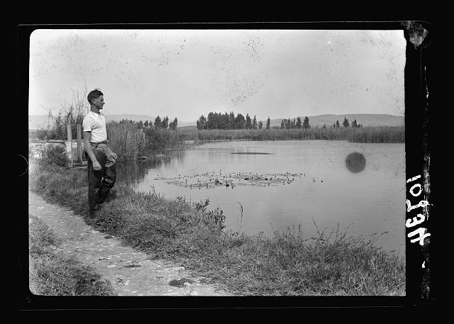 Jewish factories in Palestine on Plain of Sharon & along the coast to Haifa. Tell Karaneh Springs near Acre. Fish farm. One of the ponds showing aquatic growth