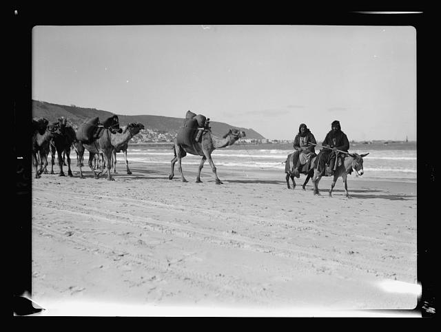 Haifa & environs. Mt. Carmel and Haifa. (Camel caravan on the sea shore)