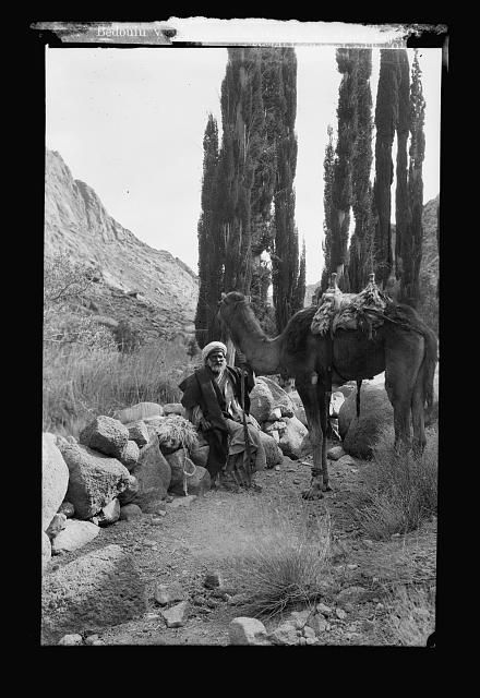 To Sinai via the Red Sea, Tor, and Wady Hebran. Bedouin with his camel resting in Wady Lejah
