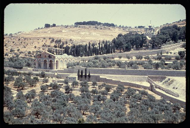 Jerusalem. Olive grove in Kedron [i.e., Kidron] Valley, Gethsemane in distance