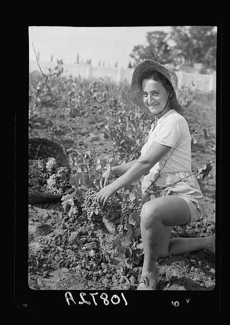 Vintage activities at Richon-le-Zion, Aug. 1939. Grape picker, close up study European immigrant girl