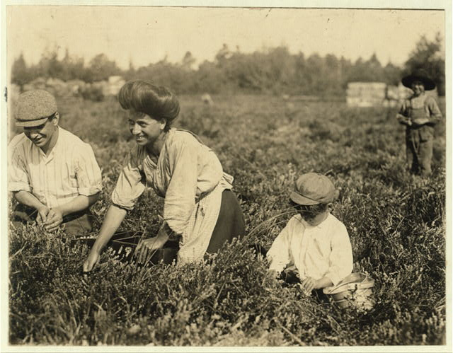 Fred Nozzecho, 604 Annin St., Philadelphial. Five years old. Picking this year. Theodore Budd's Bog at Turkeytown near Pemberton, N.J. This is the fourth week of school in Philadelphia and people will stay here two weeks more. Wit[ness] E.F. Brown.  Location: Pemberton, New Jersey.