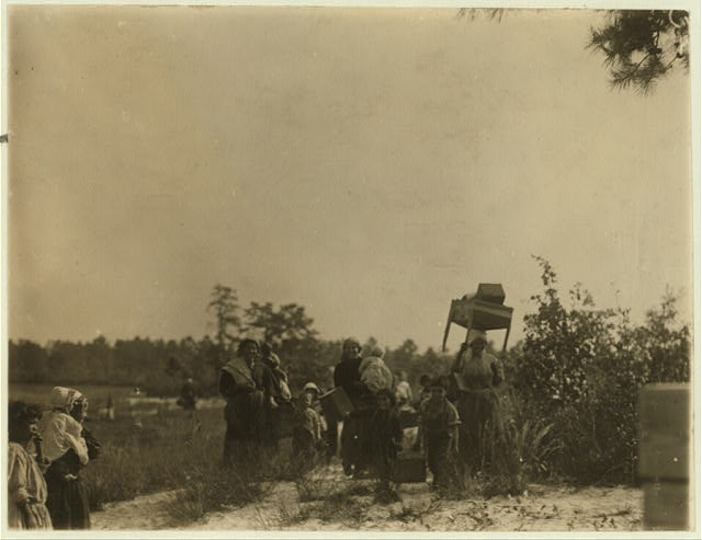 A group of cranberry pickers moving from one part of the bog to another. Whites Bog, Browns Mills, N.J. This is the fourth week of school and the people here expect to remain two weeks more. Sept. 28, 1910. Witness E.F. Brown.  Location: Browns Mills, New Jersey
