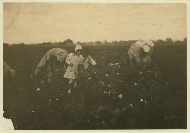 Two families working together on Kimball farm near Waxahachie. The four year old picks nine pounds a day regularly and the eleven year old picks three hundred pounds a day.  Location: Waxahachie [vicinity], Texas.