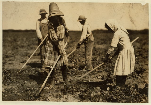 [Beet workers, ten years, twelve years, fourteen years and eighteen years, hoeing for father, Jacob Dill, in Sugar City, Colorado. They moved here ten years ago from Southern Russia, work all summer and after the topping is over in the fall they go to school. See Hine Report, Colorado Beet Workers, July, 1915.]].  Location: [Sugar City, Colorado].