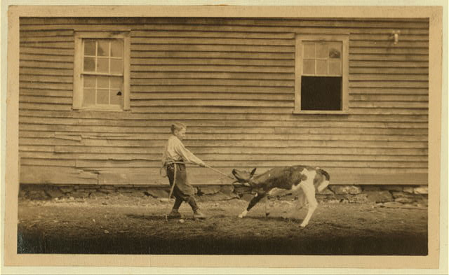 This is recreation for Jack. See Hine Report, Rural Child Labor, August 1915.  Location: Western Massachusetts, Massachusetts.