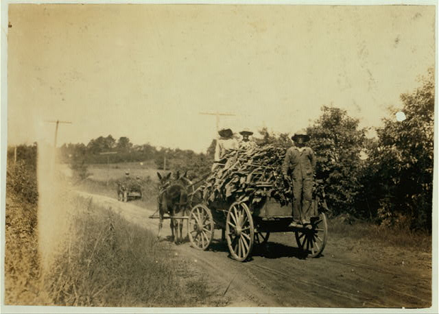 Hauling tobacco.  Location: Hebbardsville [vicinity], Kentucky