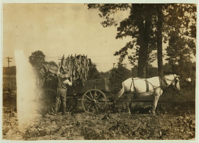 Boy 18 years old and father A.W. Galloway, R. 1, loading tobacco.  Location: Hebbardsville [vicinity], Kentucky